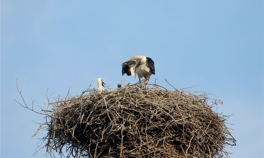 Vogel Nest Smoking Hemd Stecker Herren - Besondere Anlässe