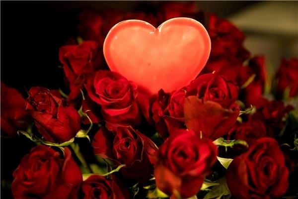 Bedeutung 50 rote rosen Rote Rosen