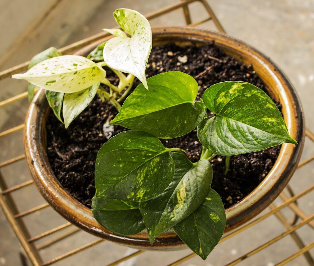 diese pflanzen sorgen f r gute luft. Black Bedroom Furniture Sets. Home Design Ideas