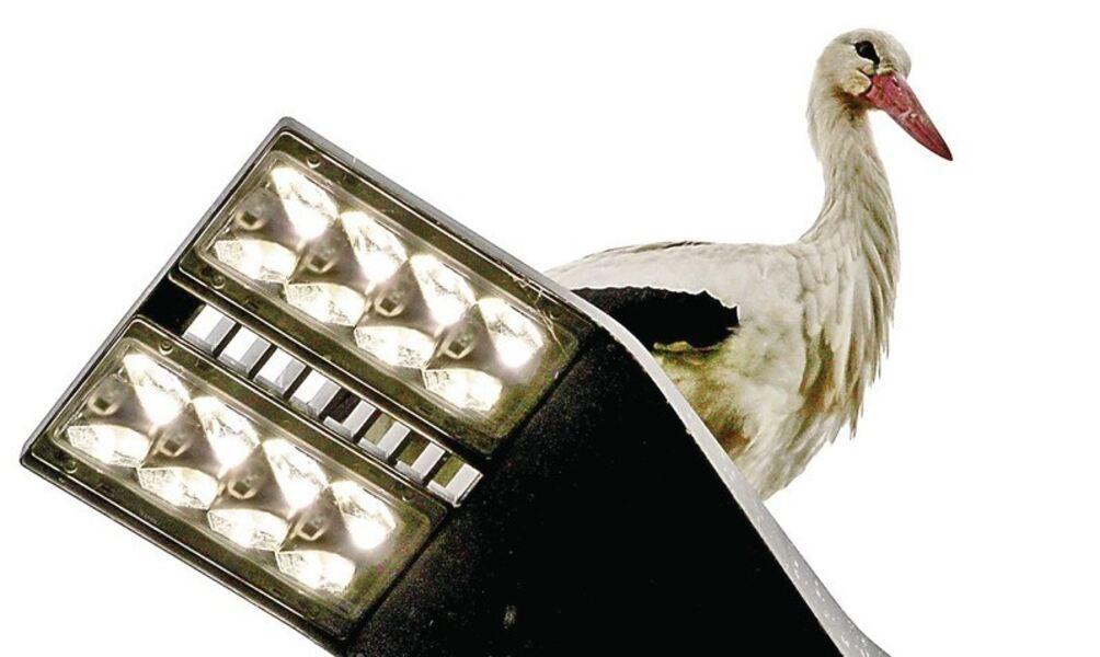 ein schalter knipst alle lampen an. Black Bedroom Furniture Sets. Home Design Ideas