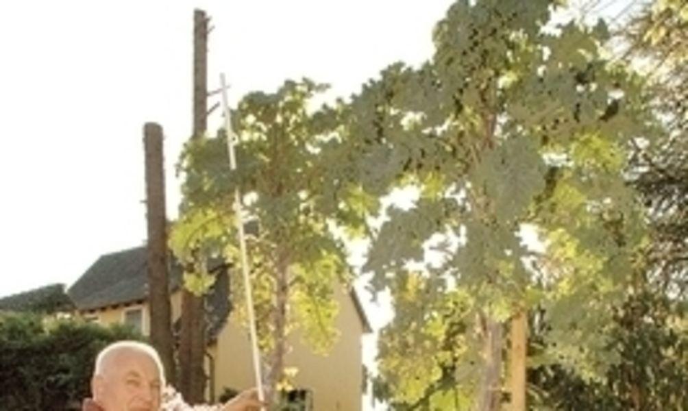 lippische palme ist 2 63 meter hoch und soll alsbald in. Black Bedroom Furniture Sets. Home Design Ideas
