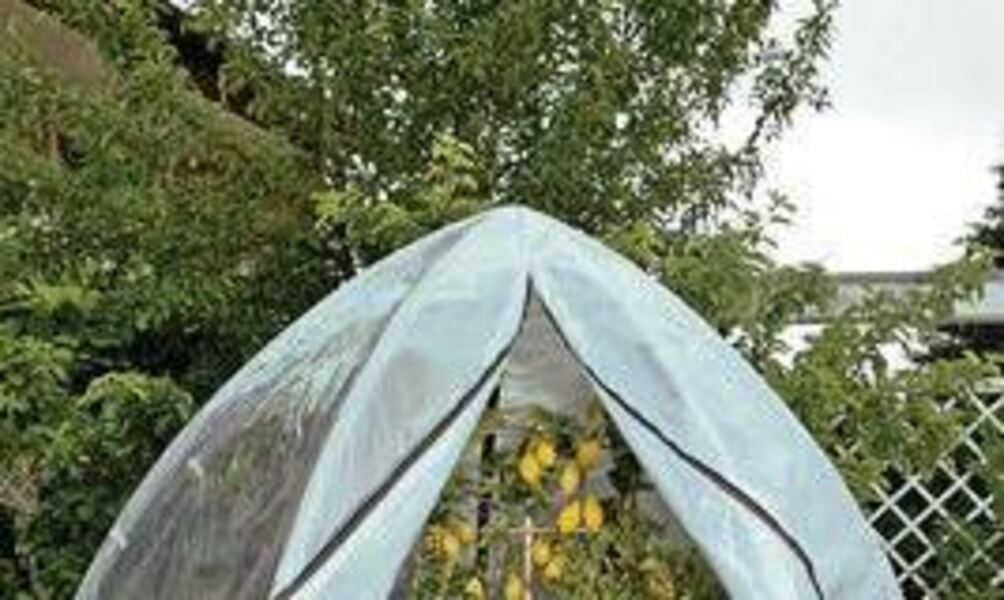 Zelt Für Pflanzen Im Winter : Zeltsaison im winter für pflanzen ideal