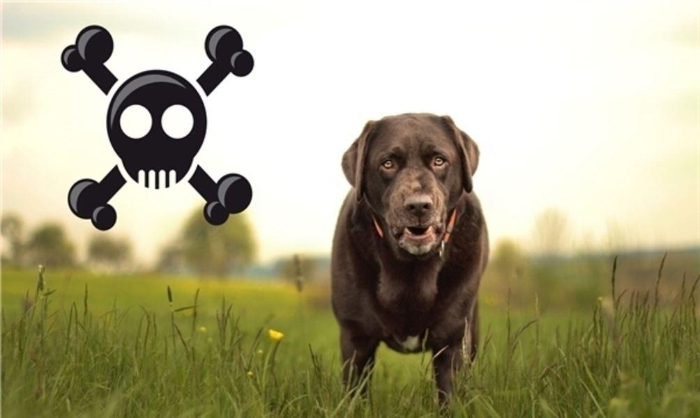Hund Vergiftet Symptome