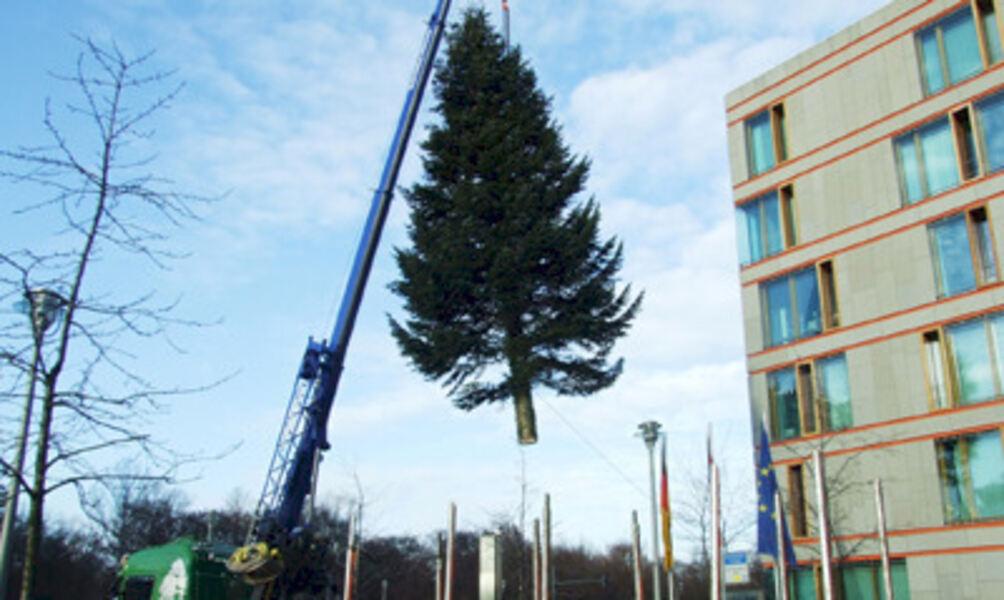 Weihnachtsbaum Berlin.Weihnachtsbaum Aus Dem Weserbergland Nach Berlin