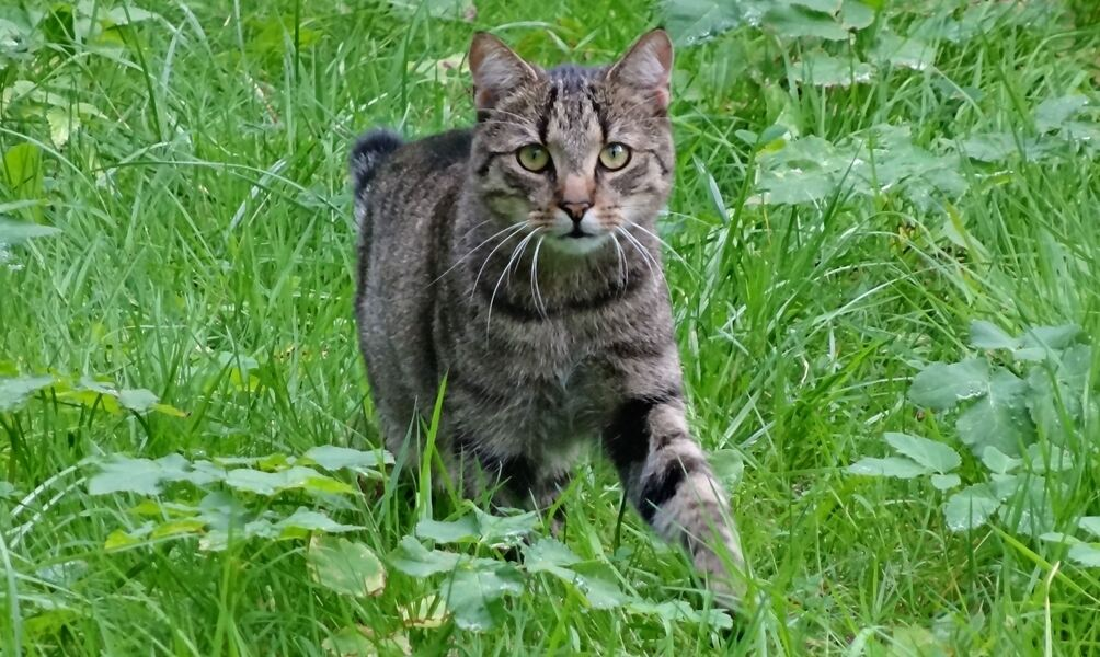 Was Hilft Gegen Streunende Katzen?